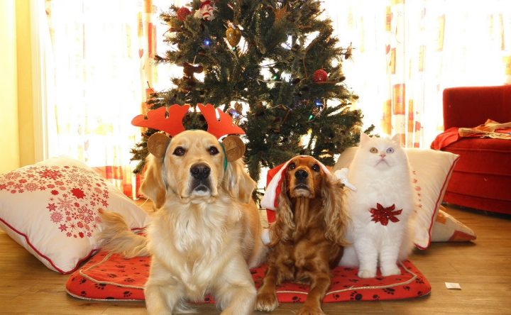 Have a Happy & Safe Holiday – Dangers your family pet can face during the holiday season.